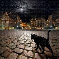 cat black night stroll chat noir