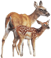 DEER_ANIMALS____Blue DREAM 70