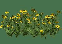 Plants.Fleurs sauvages.Wild flowers.Victoriabea