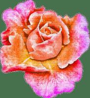 flower, ruusu, rose, fleur, kukka