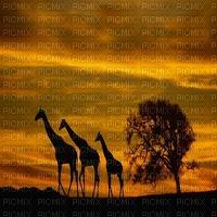 Africa background bp