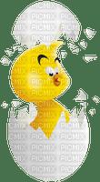 chicken egg easter 🥚🥚oeuf de poule pâques