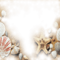 muschel shell shellfish coquille sea meer mer ocean océan ozean  fish  summer ete beach plage sand strand fond background overlay tube