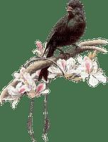 spring printemps frühling primavera весна wiosna  branch zweig leaves petals branche   garden jardin tube deco fleur bloom blüten blossom nature pétales ast bird vogel oiseau