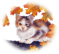 automne chat autumn cat