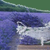 lavender lavendel lavande flower