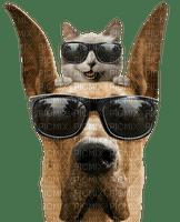 dog chien hund cat beach