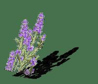 lavender fleur