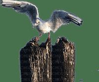 mouette seagull seemöwe