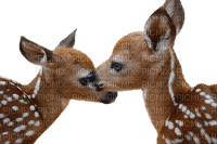 deer animals family cerf
