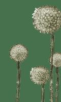Plants.Dandelion.Pissenlit.deco.Victoriabea