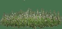 soave deco grass border green