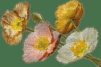 unikot, poppies, kukka, flower, fleur