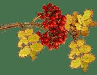 Herbst Beeren