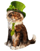 st patrick day cat chat 😺😺☘☘