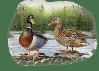 Kaz_Creations Paysage Scenery Birds