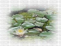 chantalmi fleur blanche verte nénuphar