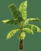 palm tree palme beach palmier