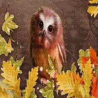 autumn owl chouette d'automne
