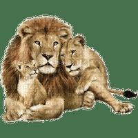 Kaz_Creations Animals Lion Cubs