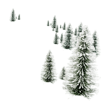 snow pine tree winter pin arbre hiver
