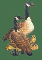spring printemps bird vögel oiseaux deco tube geese gänse oies  vogel oiseau birds