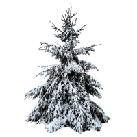 fir arbre tanne tree winter hiver snow neige