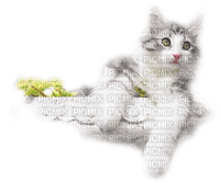 Cats'n'Kittens