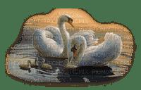 swans family famille cygne