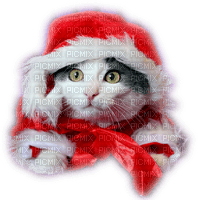 christmas cat  chat noel