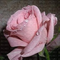MMarcia rosa fundo!
