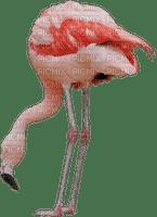 Kaz_Creations Pink Flamingo