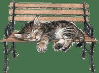 cat chat katze garden jardin parc park bench bank banc animal deco tube spring printemps frühling primavera весна wiosna