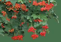 Branch.Arbre.Plants.Victoriabea