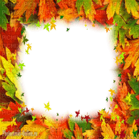 autumn leaves frame cadre  feuilles automne