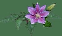 kukka, flower, fleur