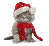 cat  winter christmas chat hiver