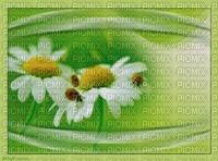 bg-background-flowers--blommor--green--grön