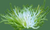 sea anemone Anémone mer