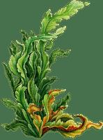 underwater plant unterwasserpflanze  deco tube  summer    ete sommer  plante sous-marine sea mer meer undersea sous l'eau