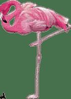 Kathleen Reynolds Beach Summer Pink Flamingo