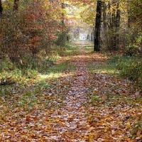 image encre couleur texture effet la nature automne paysage feuilles edited by me