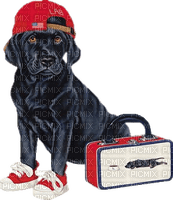 chien dog