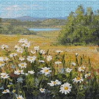 daisy field landscape