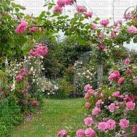 Rose garden, jardin des roses, Rosengarten