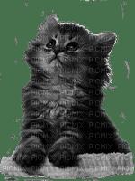 BABY CAT BEBE CHAT
