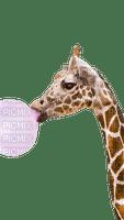 giraffe girafe animal fun bubble bulle tube