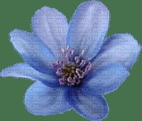 minou-blue-flower