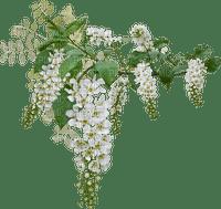 branche blanc fleurs deco flower branch