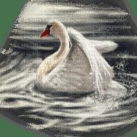 swan pond cygne  lac paysage